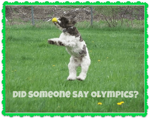 dog_olympics
