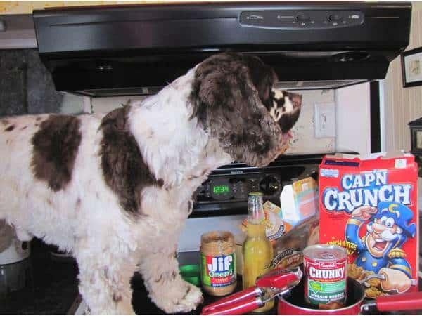 cooking_dog