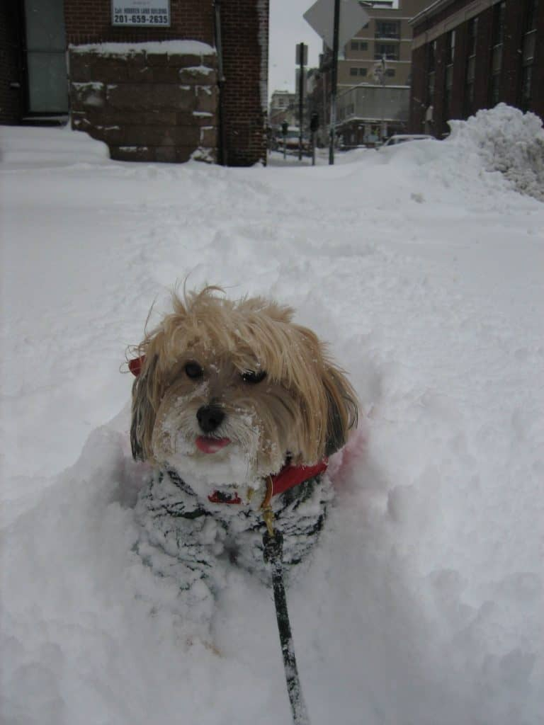 dog_snow