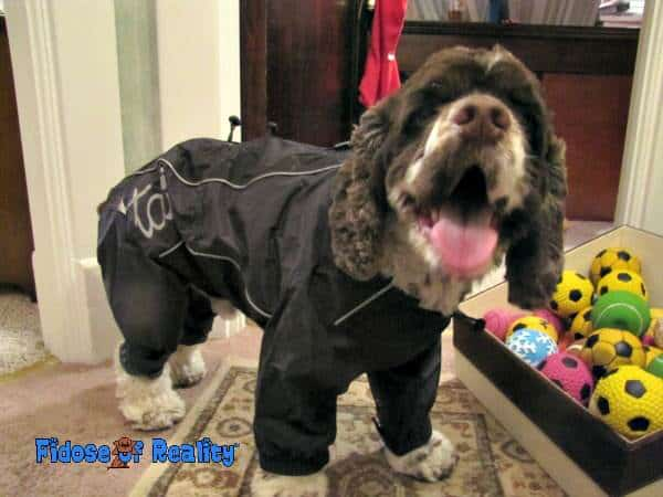 Dog in snowsuit
