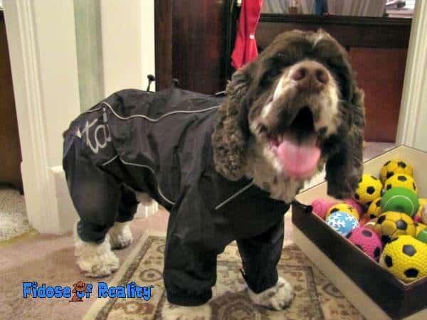 Dog in snowsuit