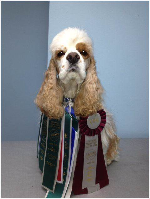 Changes at Westminster Dog Show 2014