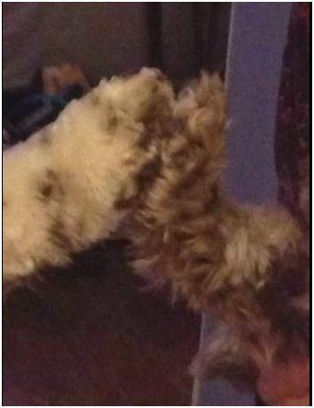 dog_paws