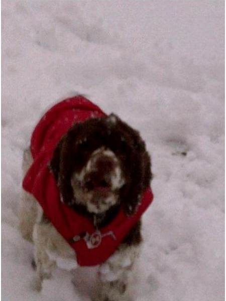 Nine Ways to Prevent Dog Winter Accidents