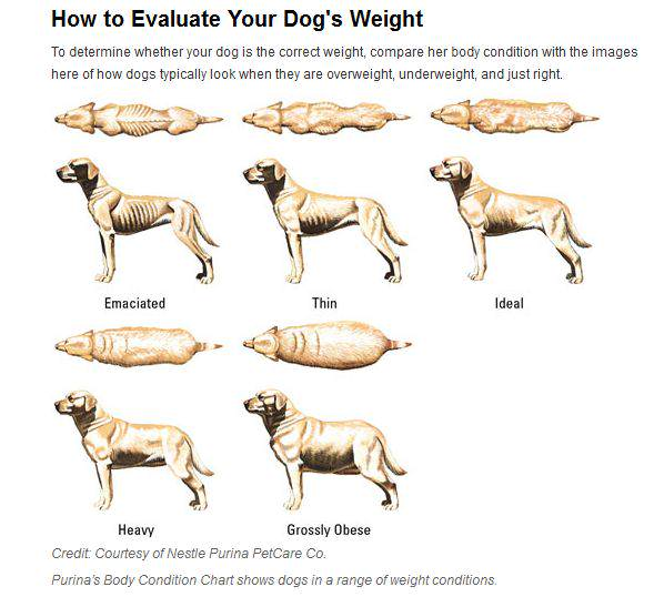 Food That Help Dogs Gain Weight