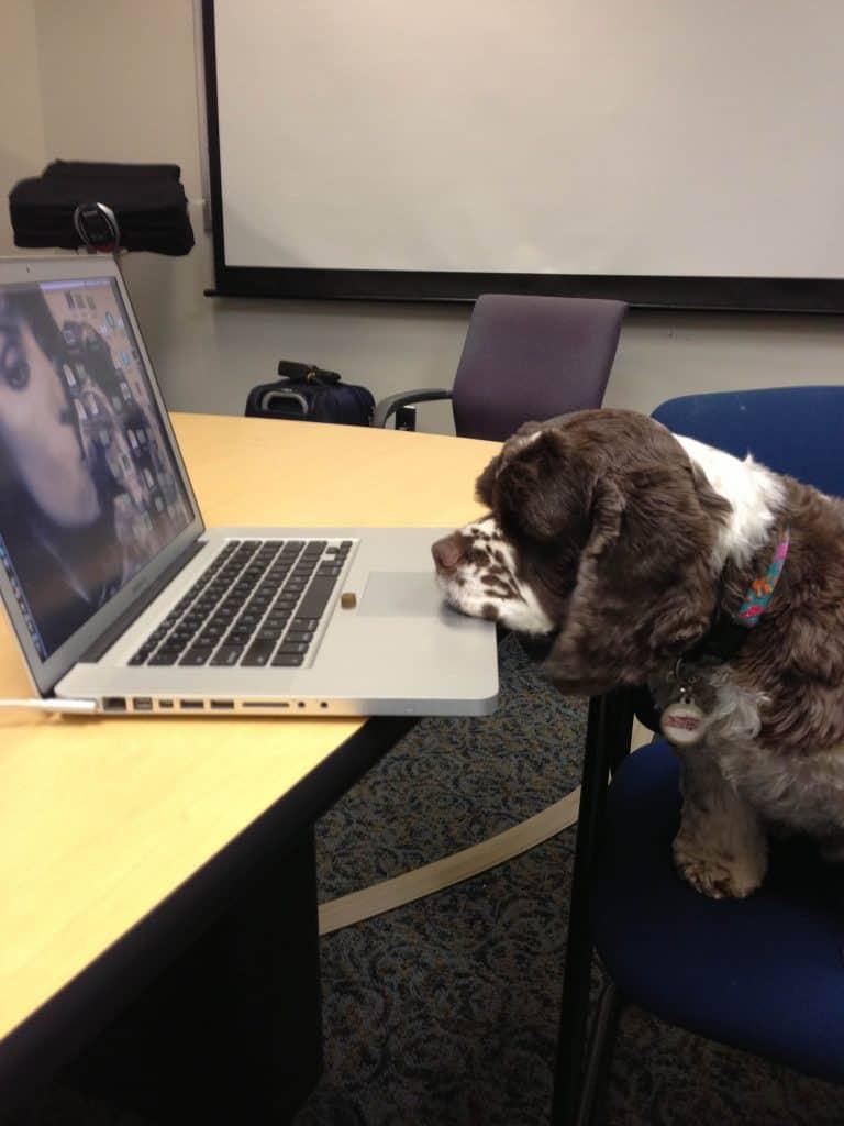 Dognition Dog Testing