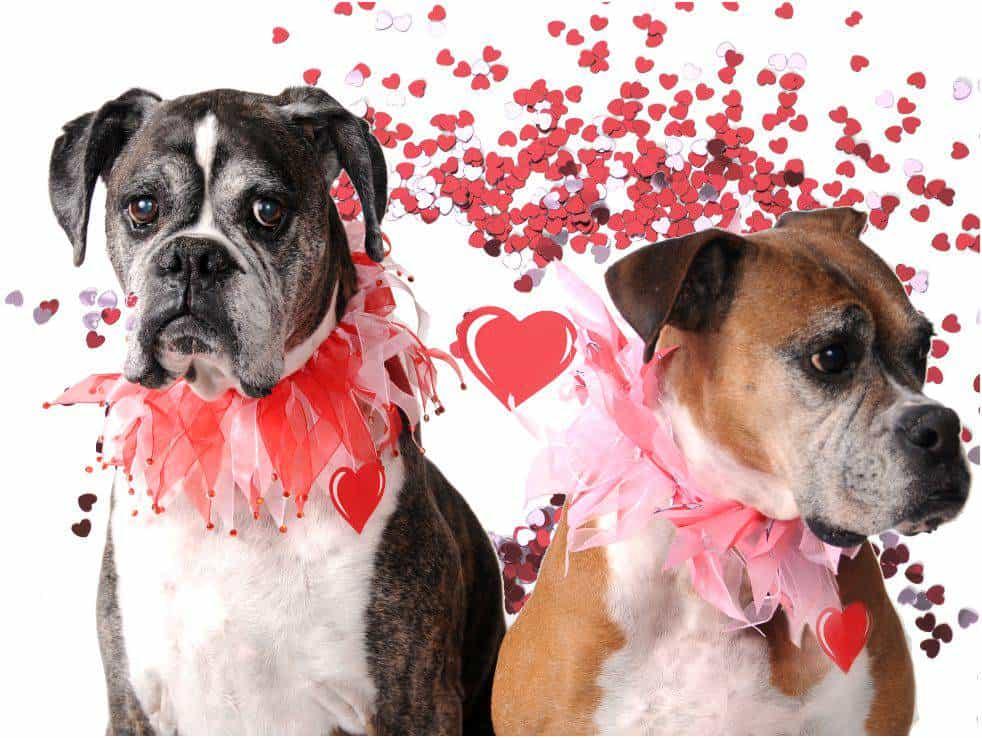 Valentines Day Dog Contest