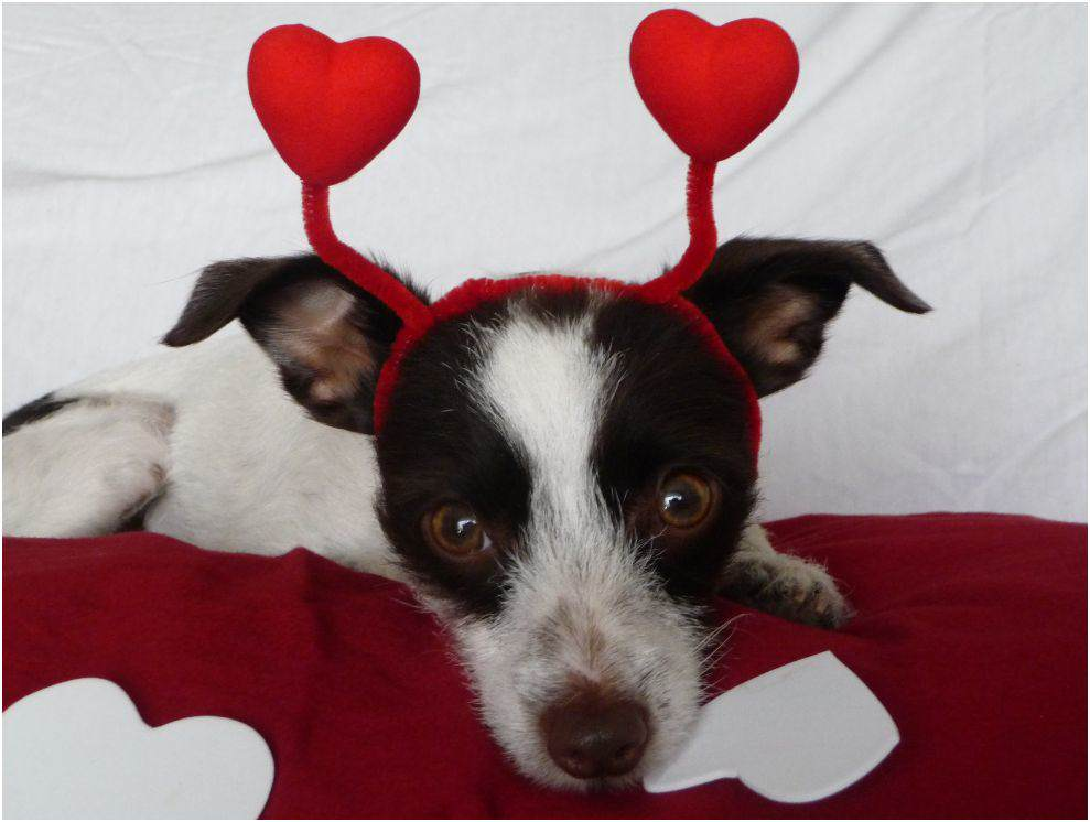 Fifteen Cutest Dogs in Love