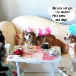 dog_hats