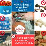 The Truth About Dog Dental Health