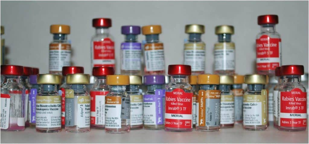 dog_vaccines