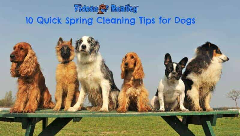 10 quick spring cleaning tips for dogs fidose of reality - Five tips for quick cleaning ...