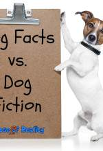 fact fiction