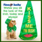 Eight Irish Dog Breeds Celebrate St Patricks Day