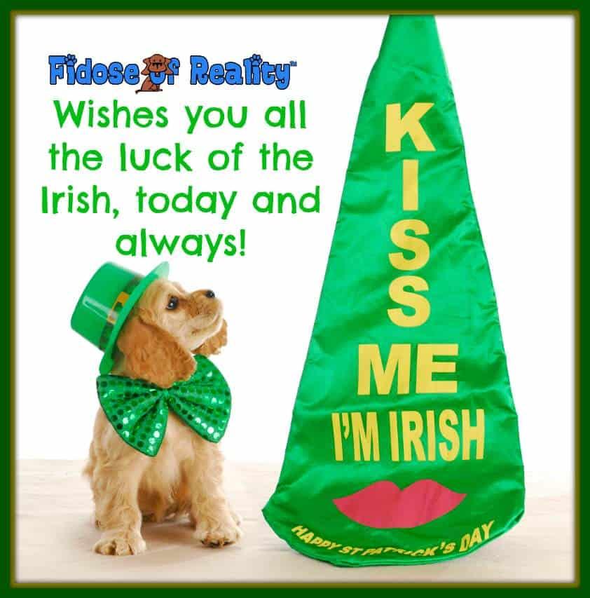 Eight Irish Dog Breeds Celebrate St Patricks Day