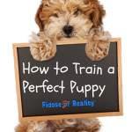 train_puppy