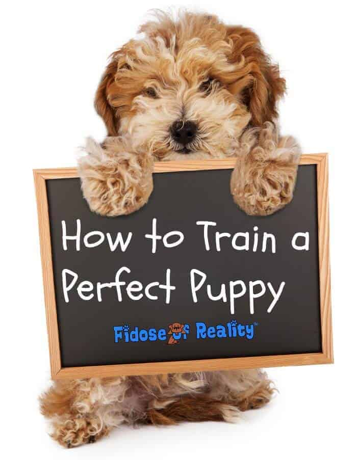 How to Train a Perfect Puppy