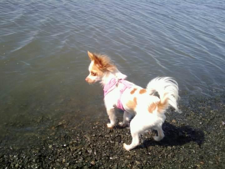 dog_tail