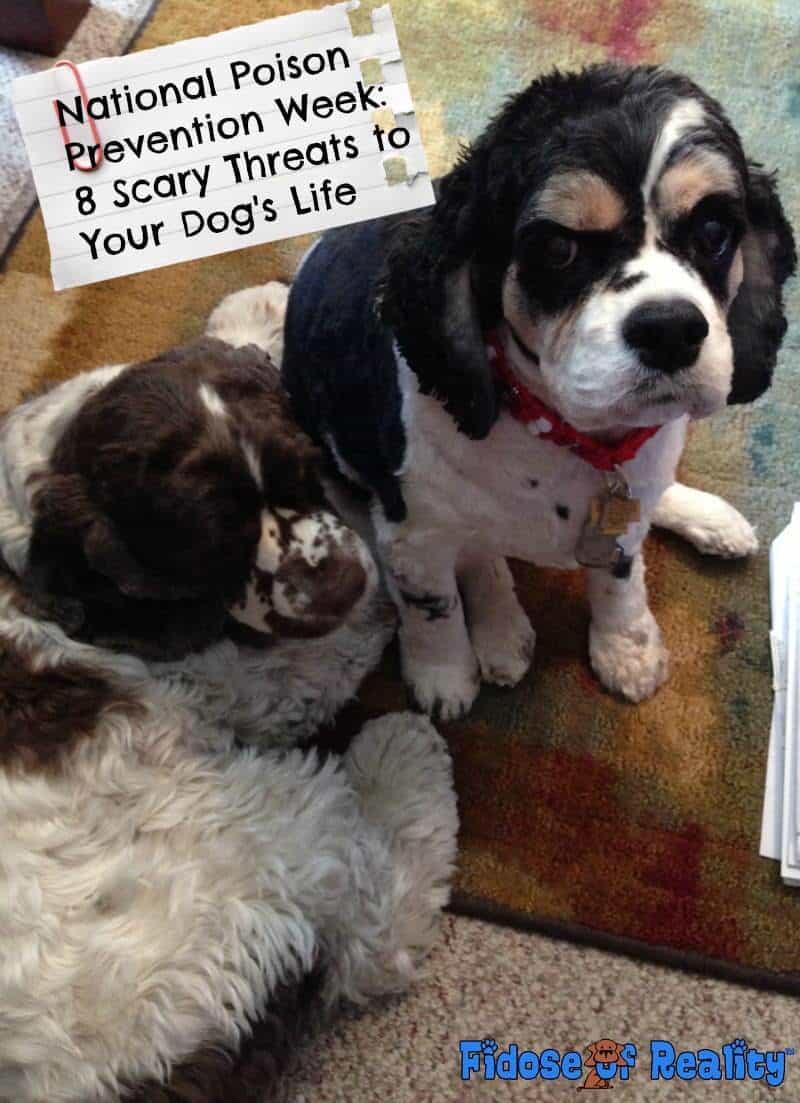 8 Scary Dog Poison Threats