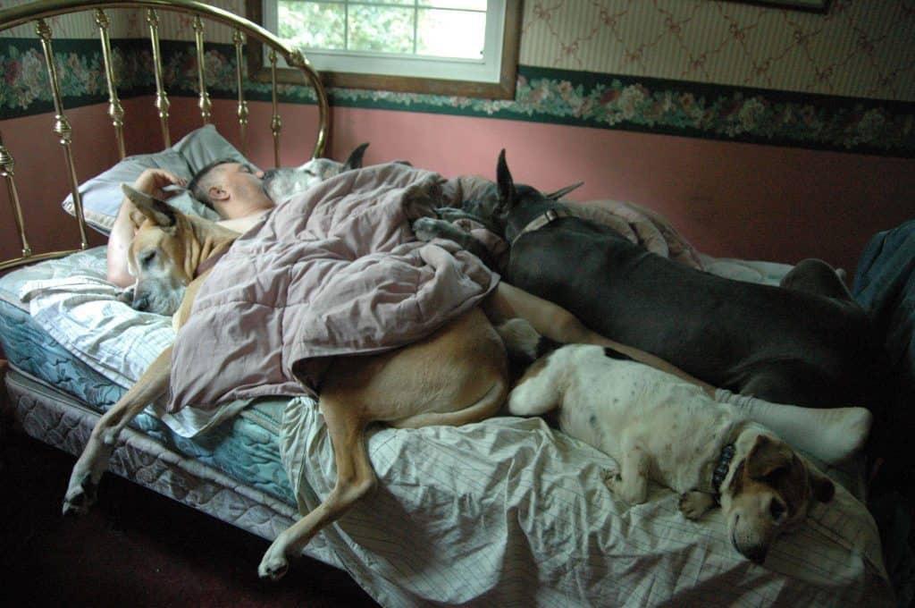 Dog Sleeping Human Bed