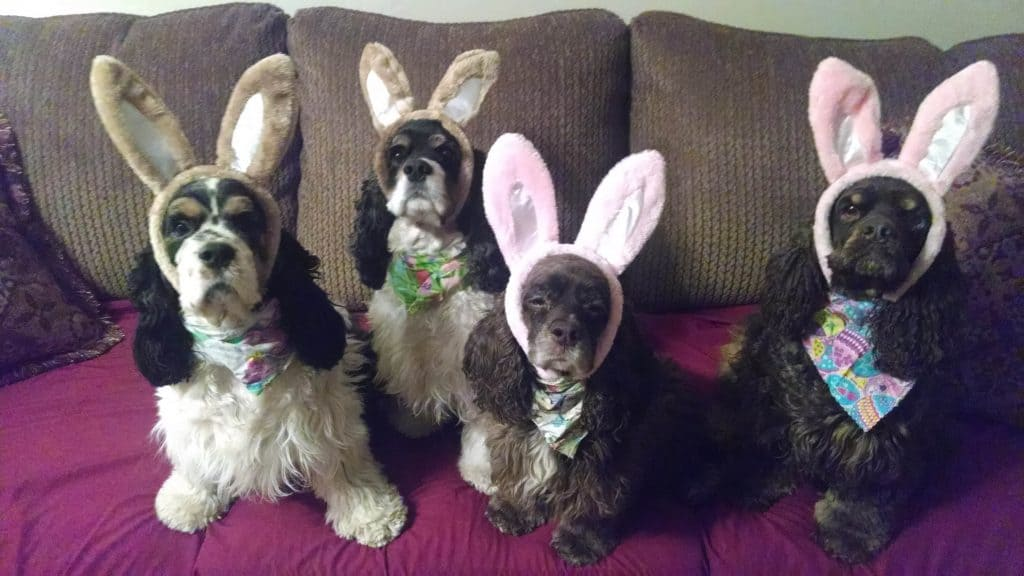easter cockers