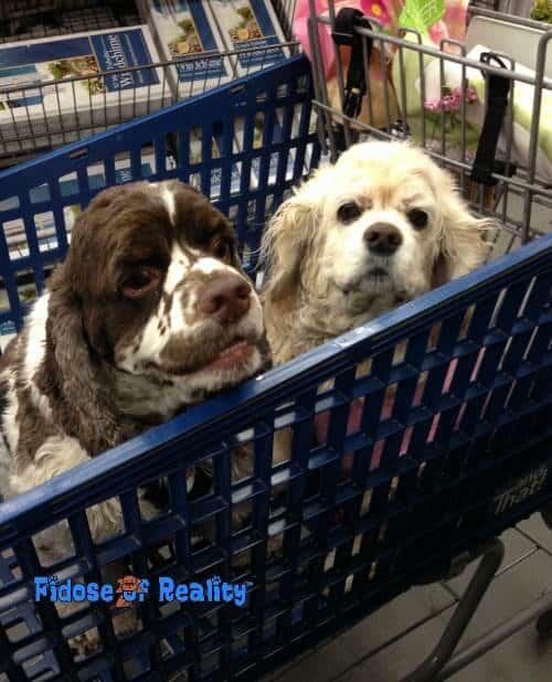 dog_carts