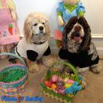 10 Spring Fling Easter Activities For Dogs