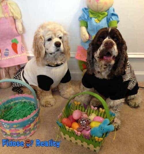 easter_dogs