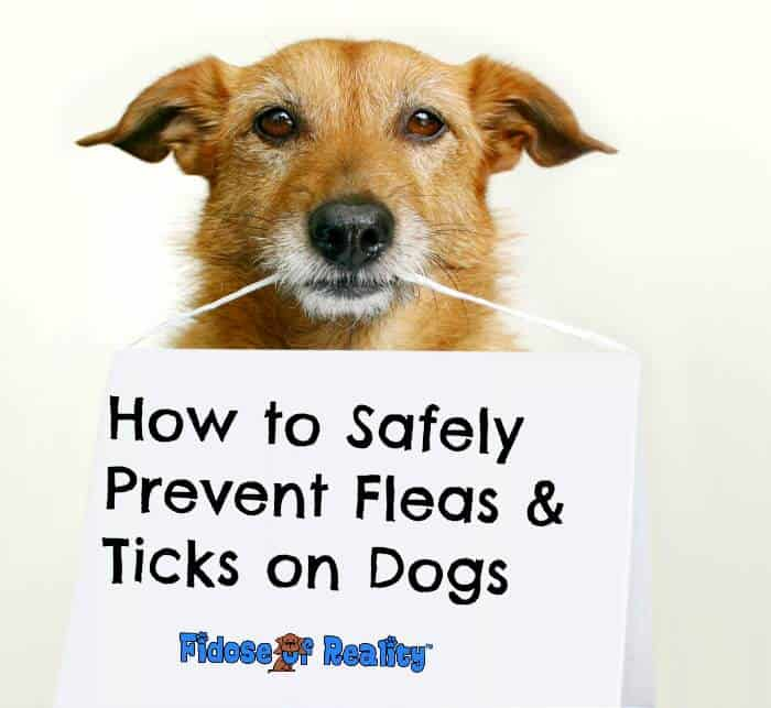 How to Safely Prevent Fleas and Ticks on Dogs