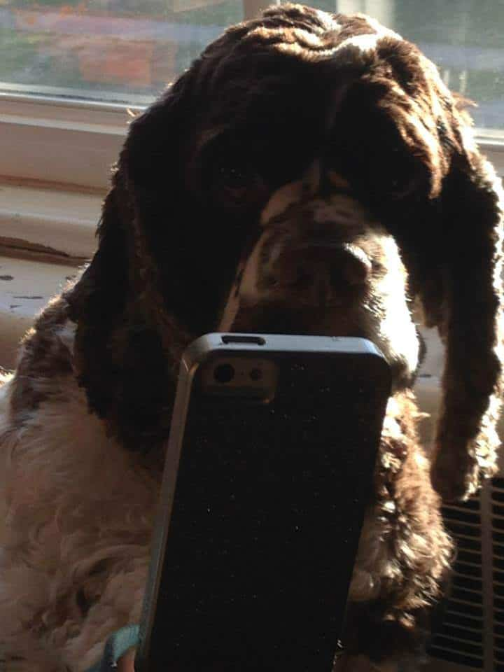 Eight Things I Learned About Social Media From My Dog