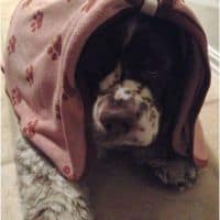 Luv & Emma's Dry Pets