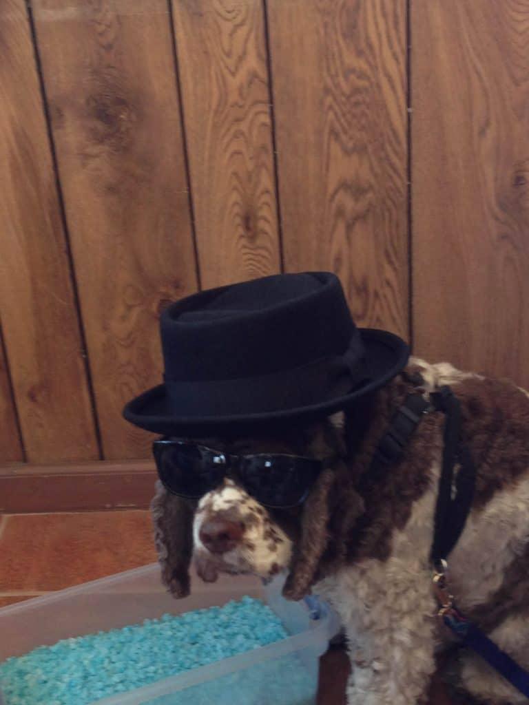 Heisenberg dog