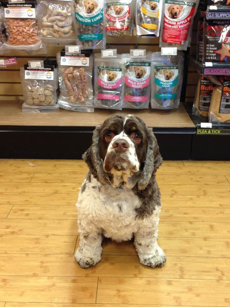 What You Don't Know About Natural Organic Dog Products