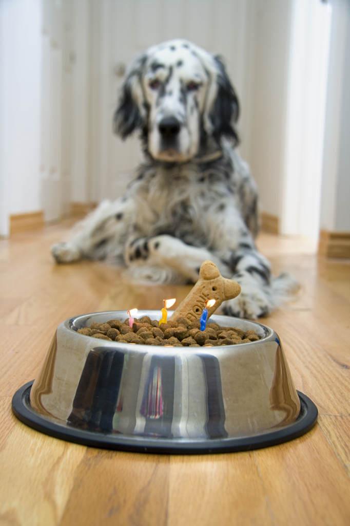 Quick! Make a wish!