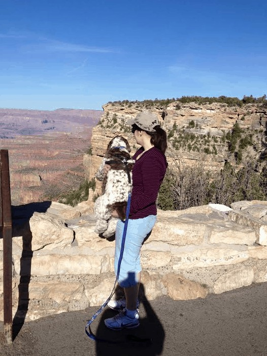 Five Hidden Secrets About Dog Friendly Travel