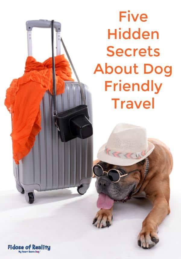 Dog friendly travel secrets