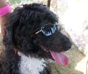 dog glasses