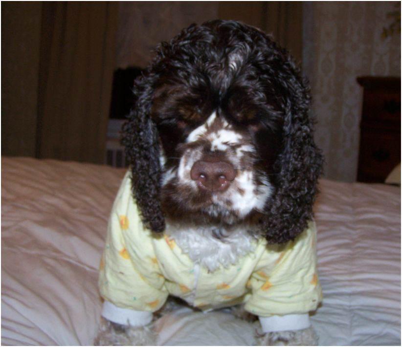 After bath dog