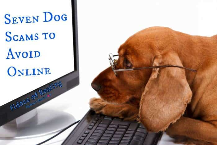 Seven Dog Scams to Avoid Online