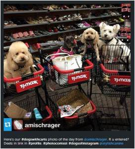 dogs with carts