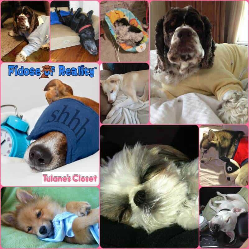 Sleeping Dog Pajama Party Photo Contest