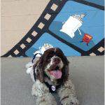Pet friendly Drive in Movies
