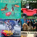 dogs carts