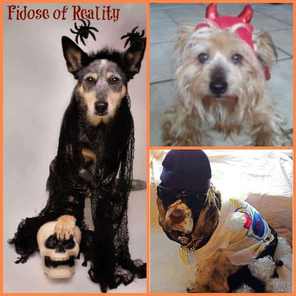 Winners of Halloween Dog Photo Contest 2014
