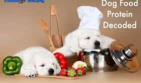 dog food protein