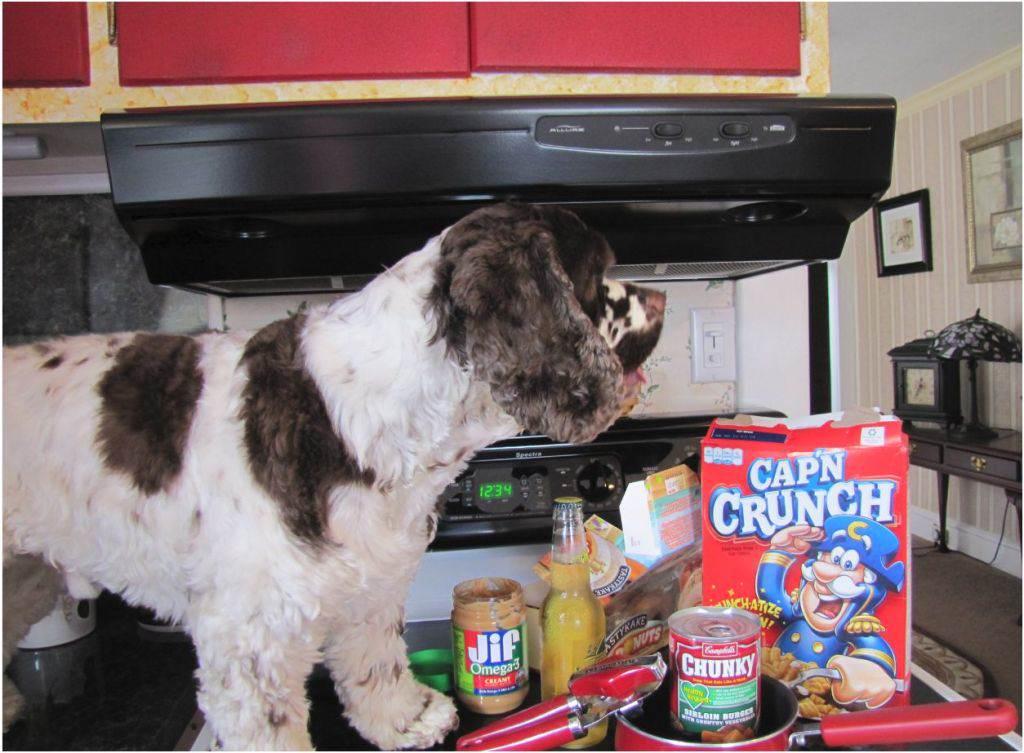 dog cooks