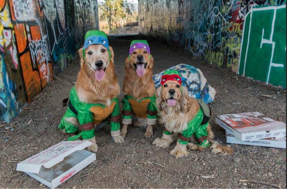 dog halloween contest - Pet Halloween Photo Contest