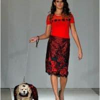 designer dog apparel