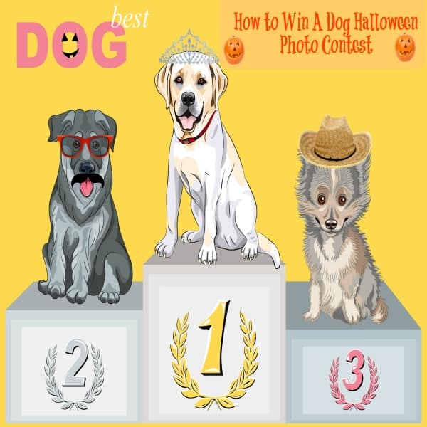 how to win a dog halloween costume contest