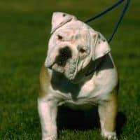 dog weight
